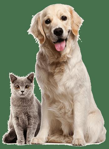 mobile dog grooming calgary