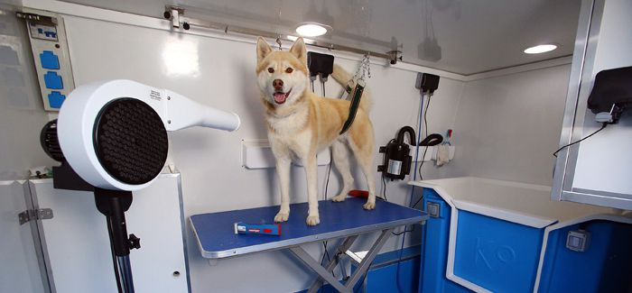 The Benefits of a Professional Dog Grooming Service