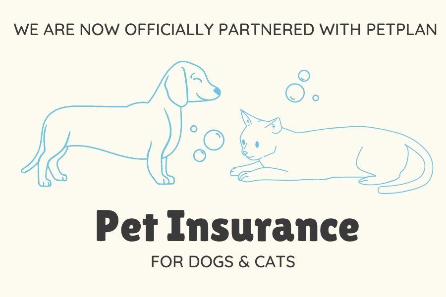 Pet Insurance image